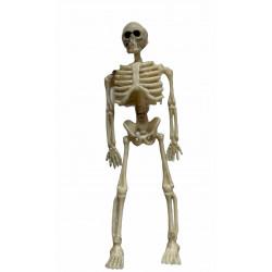 lille skelet